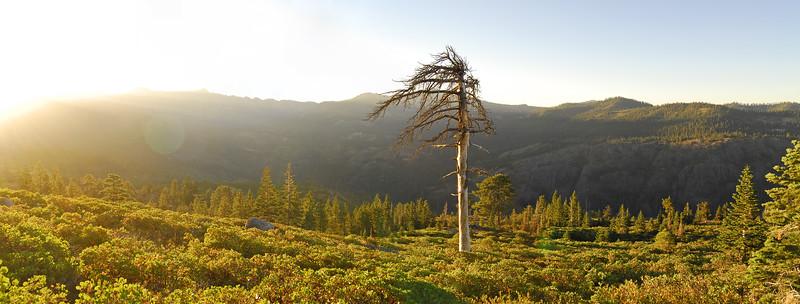 High Sierra sunrise. Near Donner Pass, Tahoe National Forest